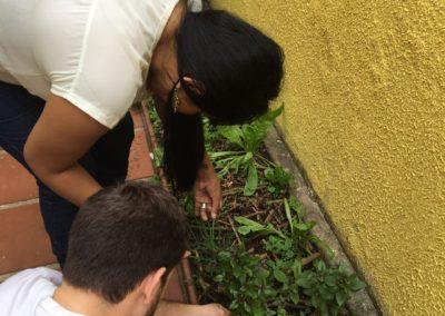 Horta - atividade educacional
