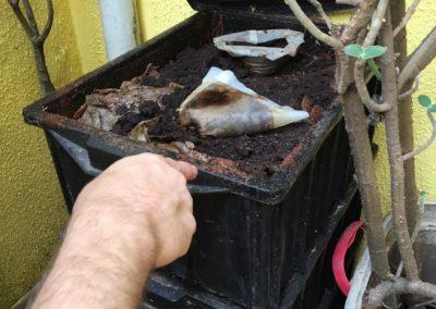 Horta - composteira